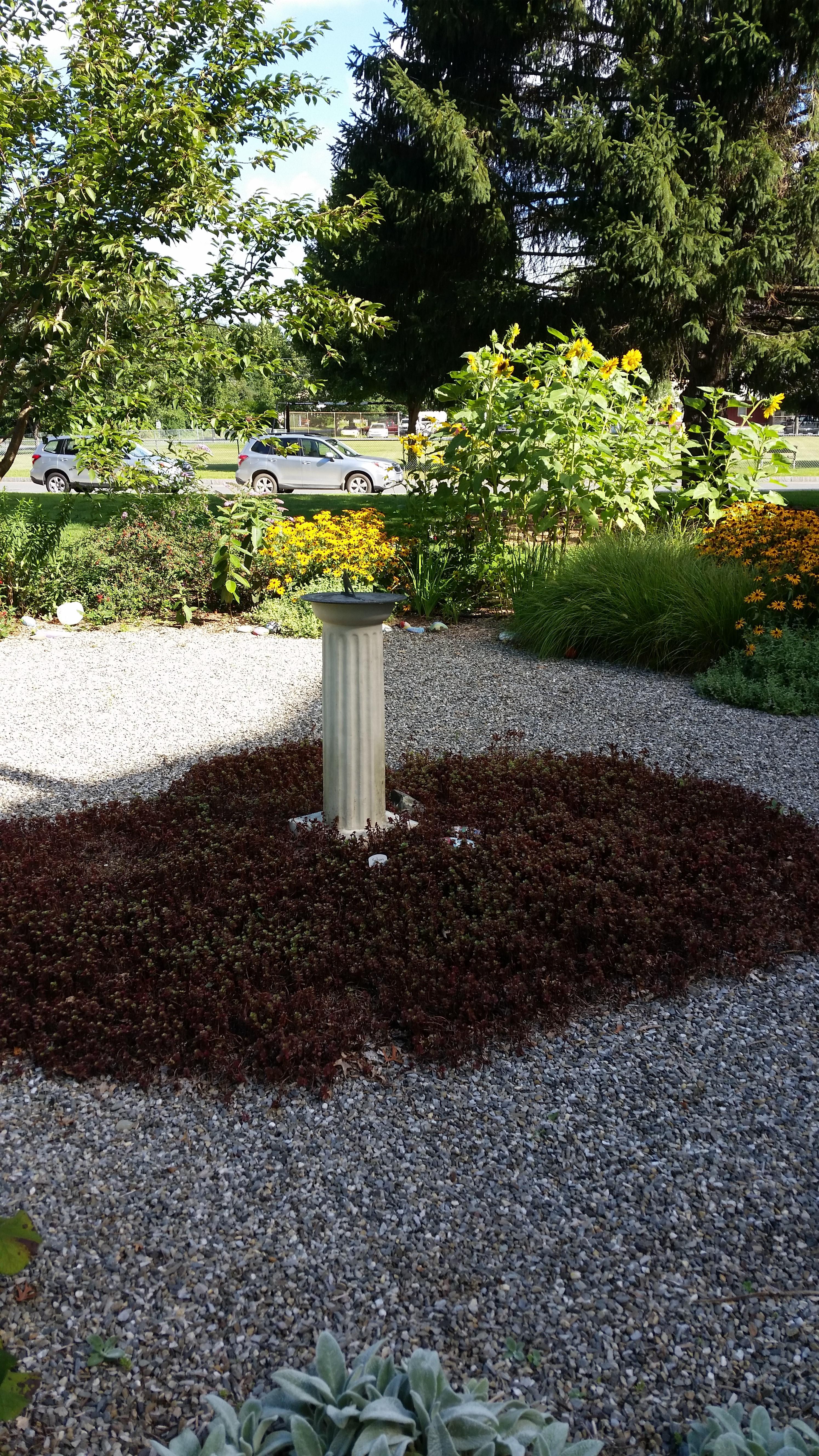 Garden Pine Garden